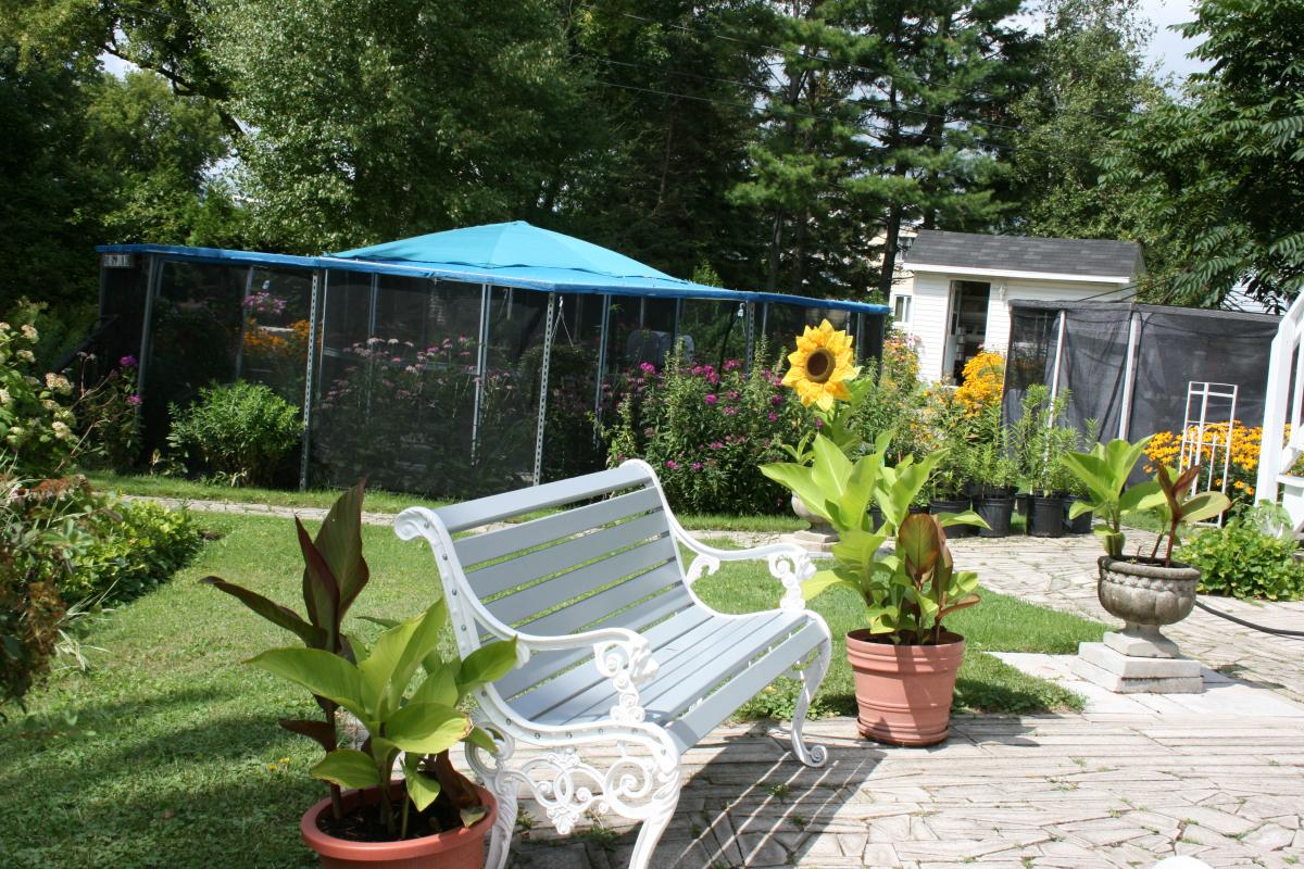 the backyard of mister butterfly butterfly and caterpillar breeder